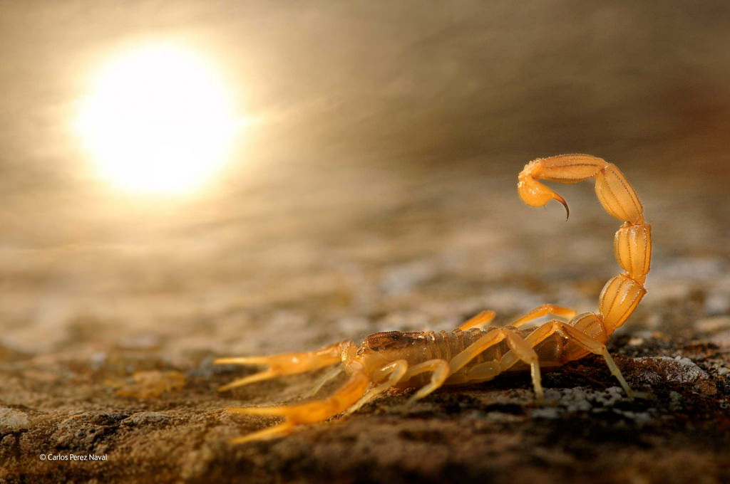 carlos-perez-naval-wildlife-photographer-2014 Wildlife Photographer of the Year 2014 winners announced Exposure