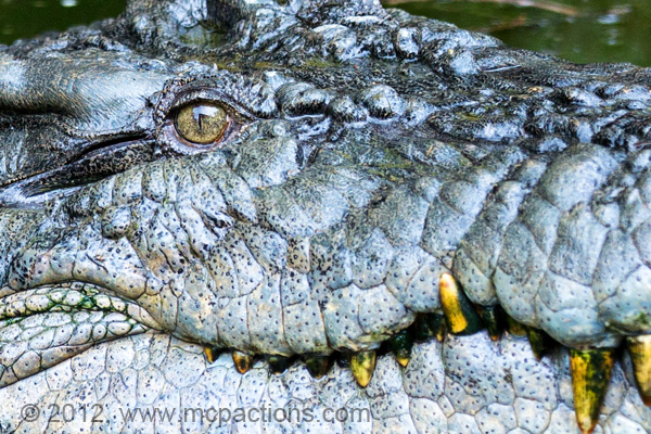 closeup-croc The Perfect Photographer Pack List For Your Next Vacation MCP Thoughts Photography Tips