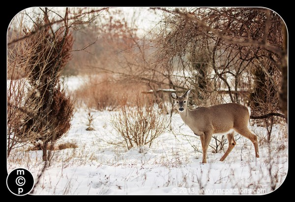 deer-in-the-snow-35-jenna-jewels-fall-foliage-burnt-firewood-600x4101 What Photoshop Actions To Buy To Edit Wildlife Photography Blueprints Photo Sharing & Inspiration Photography Tips Photoshop Actions Photoshop Tips & Tutorials