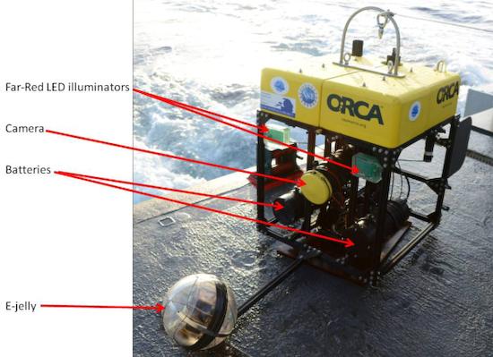 edith-widder_medusa_e-jelly How the Kraken was filmed, using revolutionary deep sea photography News and Reviews
