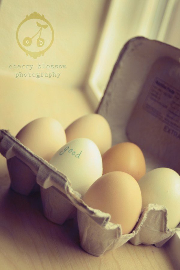 eggs-600x899 MCP Project 52 - Week 15 Wrap Up + Week 16 Theme Activities Assignments Photo Sharing & Inspiration Project 52