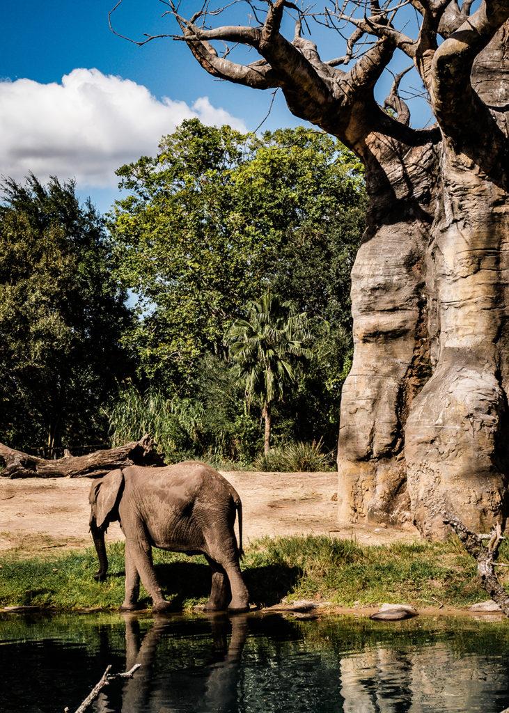 elephant lightroom hdr resized