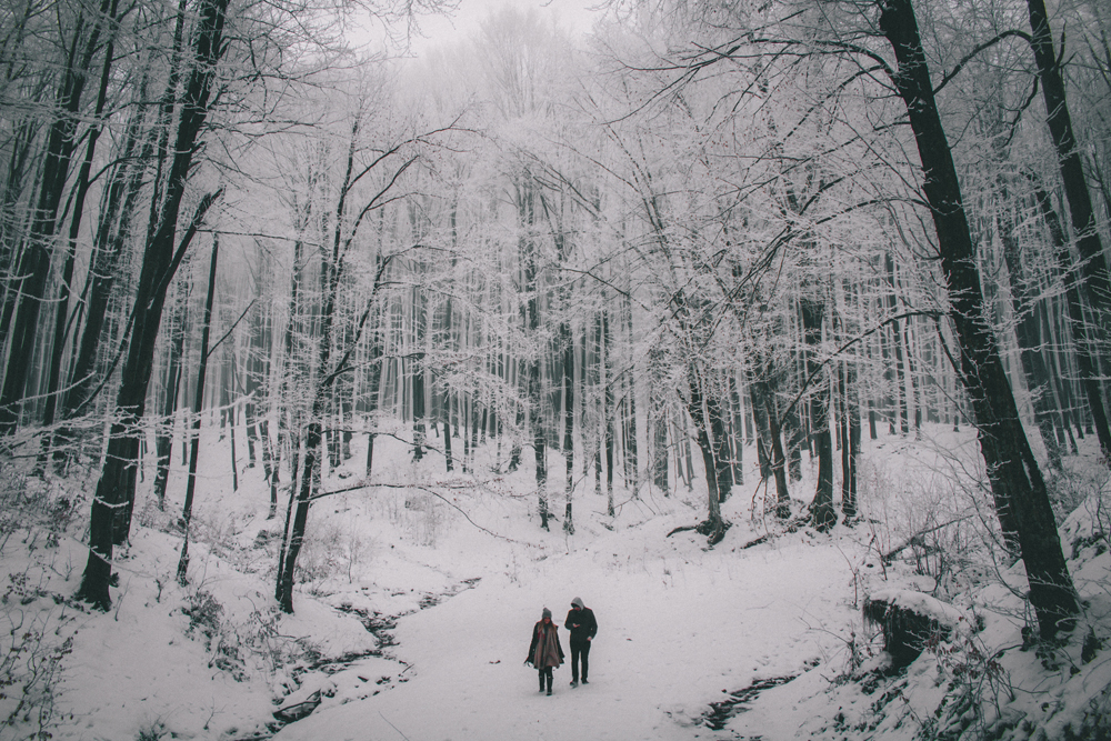 fineas-anton-177948 How to Beat the Winter Blues With Stunning Photographs Photography Tips