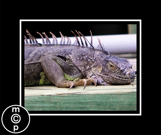 iguana14 Florida Vacation: Sharing a few shots Photo Sharing & Inspiration Photoshop Actions