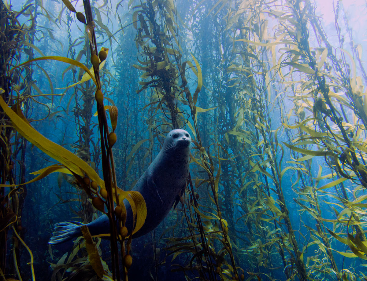 kyle-mcburnie-shy-seal Cute seal portrait photo nabs Underwater Photography Contest Exposure