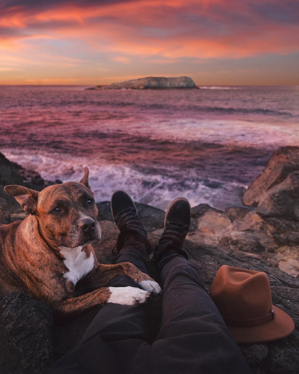 leio-mclaren-299158 How to Take Expressive Photos of Pets Photography Tips