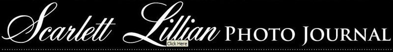 logo Interview with Wedding and Fashion Photographer Scarlett Lillian Interviews Lightroom Tutorials Photoshop Actions