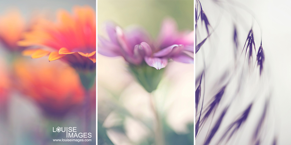 louiseimages_backgroundflower 6 Steps For Better Macro Photography Guest Bloggers Photography Tips