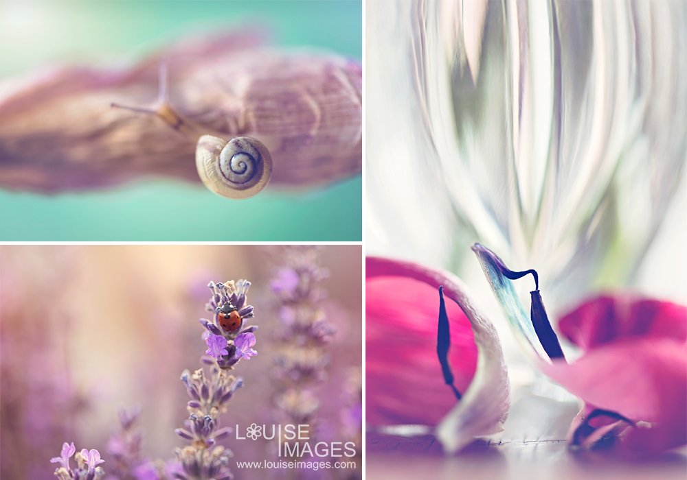louiseimages_othersubjects 6 Steps For Better Macro Photography Guest Bloggers Photography Tips