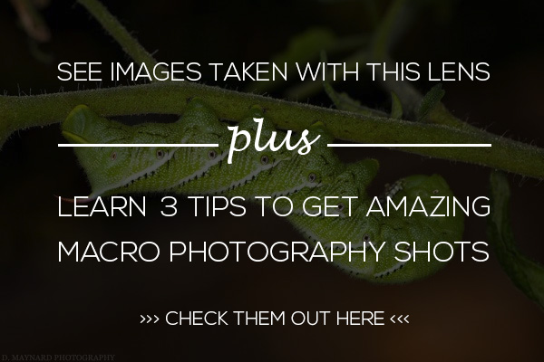 macro Tamron 90mm Macro Lens GIVEAWAY - Win a Sweet New Tamron Lens Announcements Contests