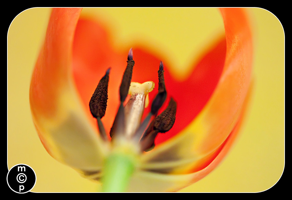 macros-21-copy Macro Photography: Quick Tips to Get You Started Activities Free Editing Tools Photo Sharing & Inspiration Photography Tips