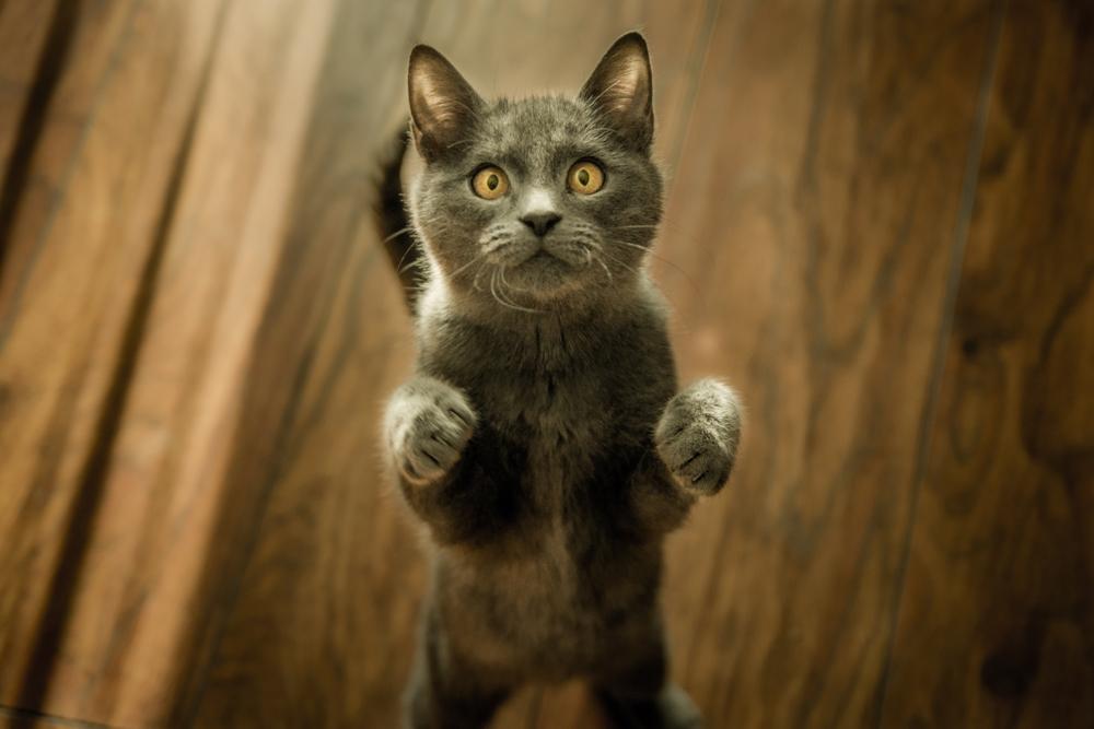 marko-blazevic-219788 How to Take Expressive Photos of Pets Photography Tips