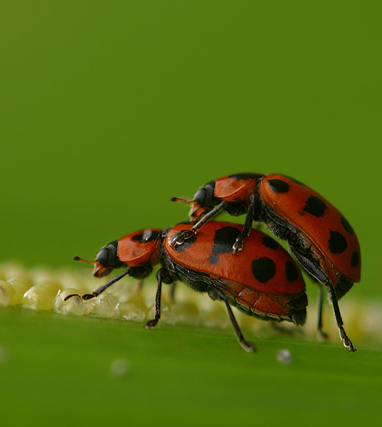 mates 3 Tips To Get Amazing Macro Photography Shots This Spring Guest Bloggers Photography Tips