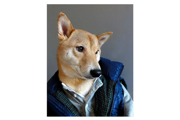 Menswear Dog is a Tumblr blog consisting of photos of a stylish dog wearing men's clothers