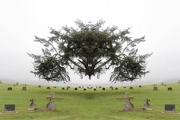 photography of tree in cemetery, mirrored to give impression that it is floating