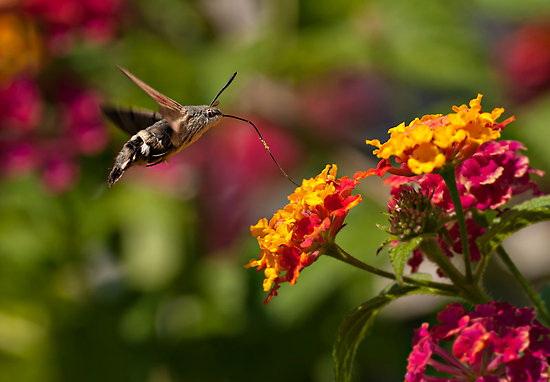 moth Photographer David Morton wins Essence of Nature photo contest News and Reviews