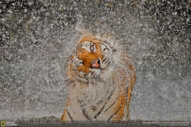 national-geographic-grand-prize-nature-winner