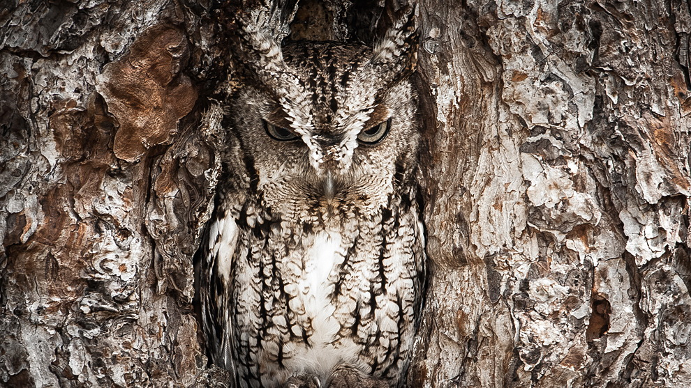 owl National Geographic reveals 2013 Traveler Photo Contest winner News and Reviews