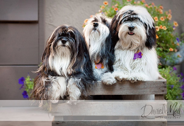 portrait-of-three-dogs Working with Dogs and Their Owners for Amazing Pet Portraits Guest Bloggers Photography Tips