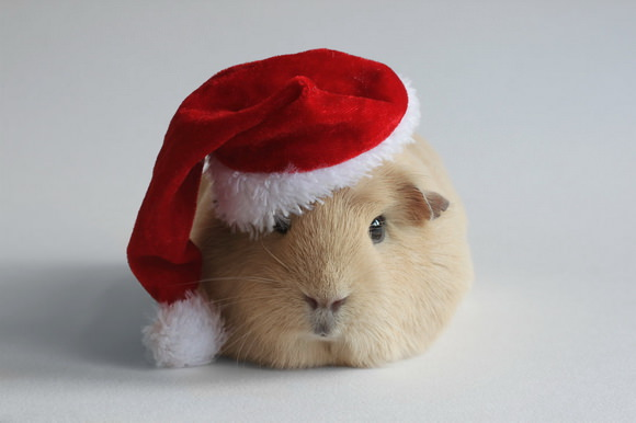 Booboo is Santa for her friends