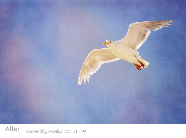 seagull-after2-600x4451