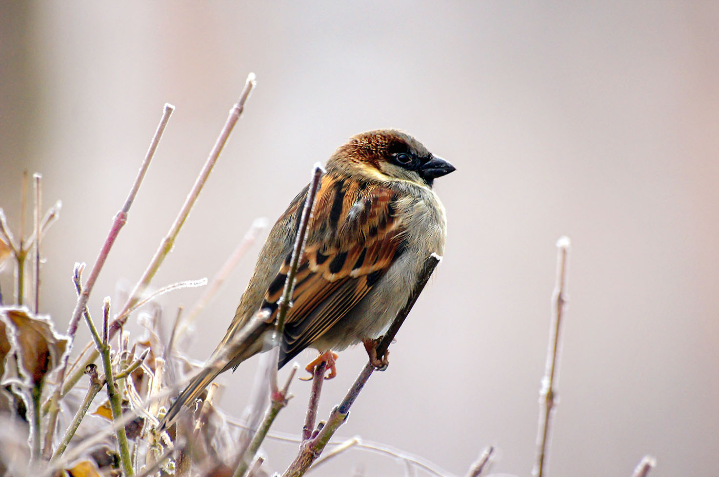 sparrow1 Beauty of Nature Enhanced with Inspire