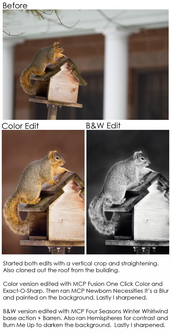 squirrel-ba1-600x1170 How To Edit Wildlife Photos Quickly With Photoshop Actions Blueprints MCP Thoughts Photo Sharing & Inspiration Photography Tips Photoshop Actions Photoshop Tips & Tutorials