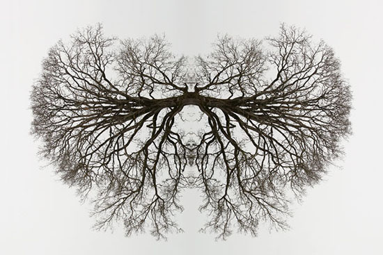 tree_organ Natural symmetry in the artificial ways of Traci Griffin Exposure