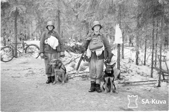 Two Finnish soldiers dogs