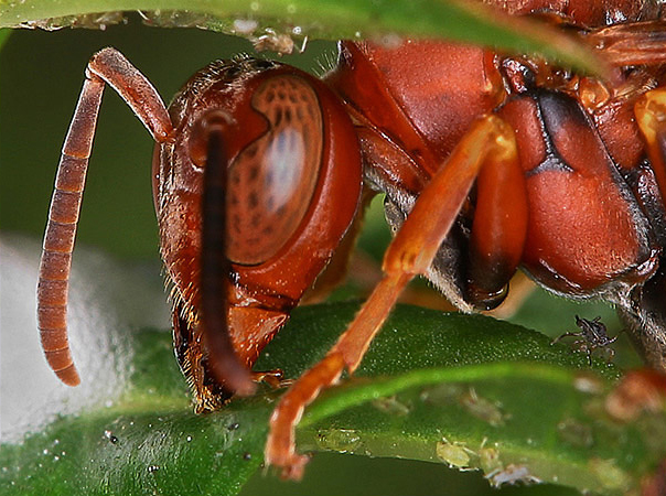 wasp_2 3 Tips To Get Amazing Macro Photography Shots This Spring Guest Bloggers Photography Tips