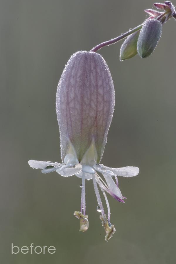 weeping-flower-before-600px.jpg