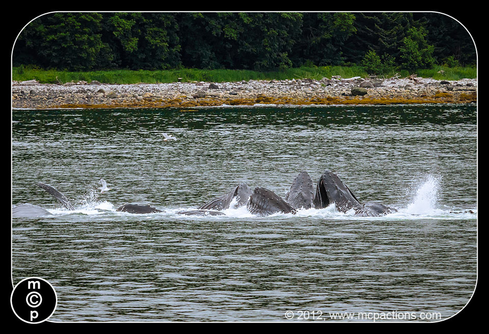 whales-in-juneau-80 Practice Makes Perfect: Learn Photography From Seagulls MCP Thoughts Photography Tips