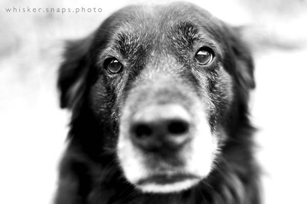 whiskersnaps_6 8 Steps to a Successful Pet Photography Session Guest Bloggers Photography Tips