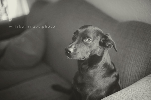 whiskersnaps_8 8 Steps to a Successful Pet Photography Session Guest Bloggers Photography Tips