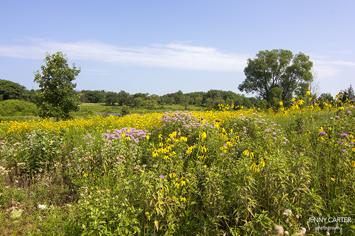 wildflowers How to Create a Panoramic Wrapped Picture Activities Guest Bloggers Photo Sharing & Inspiration Photoshop Tips & Tutorials