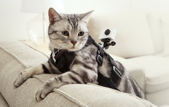 xiaomi-yi-cat-harness Xiaomi Yi action camera takes on GoPro with better features News and Reviews