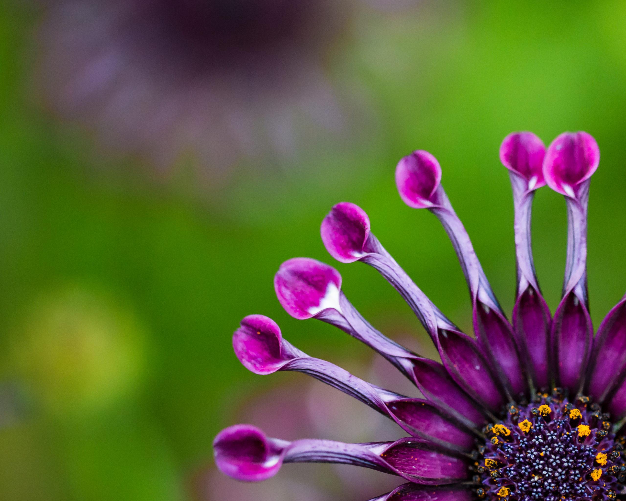 7X1C3228-v1-crop-scaled Vivid Floral Lightroom Edit