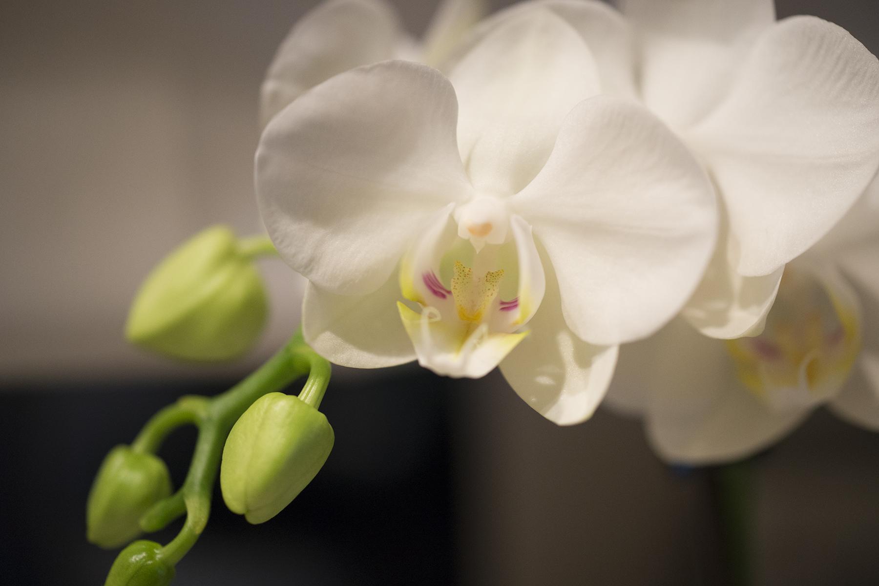 DSC8509soocweb Inspirational Orchids