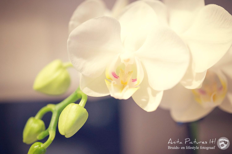 DSC8509web Inspirational Orchids