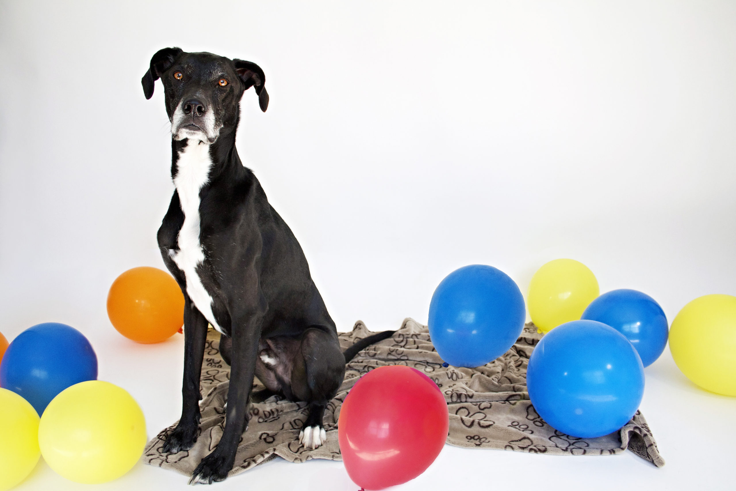 Frankiebirthday-scaled Editing Pet Images with Actions for Elements