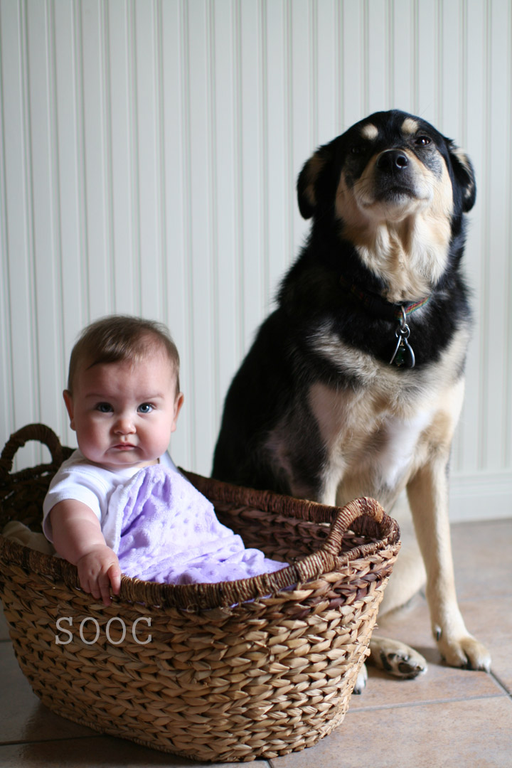 IMG_1886_before Dog and Baby Edit
