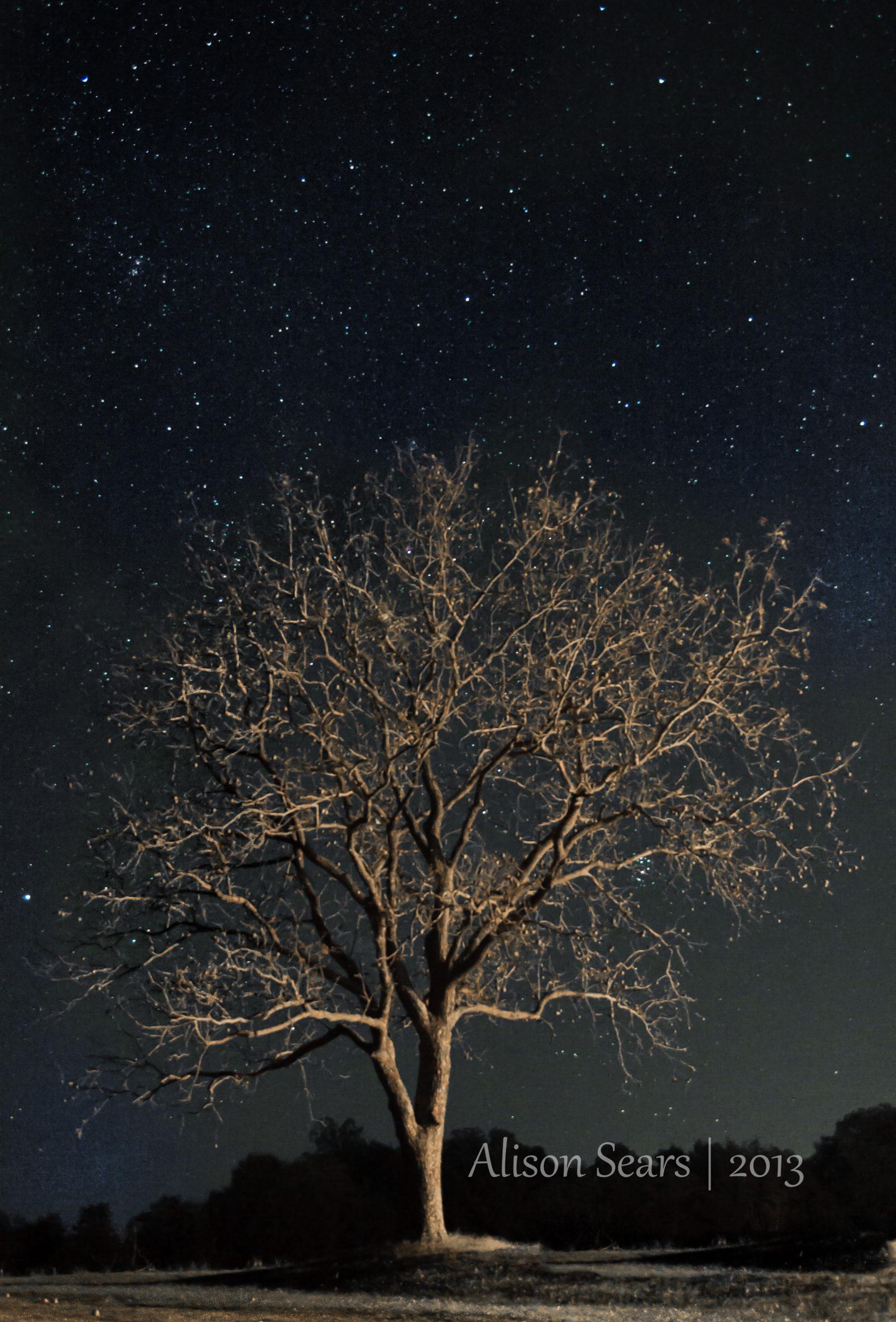 IMG_7200-17-scaled Enlightened Tree