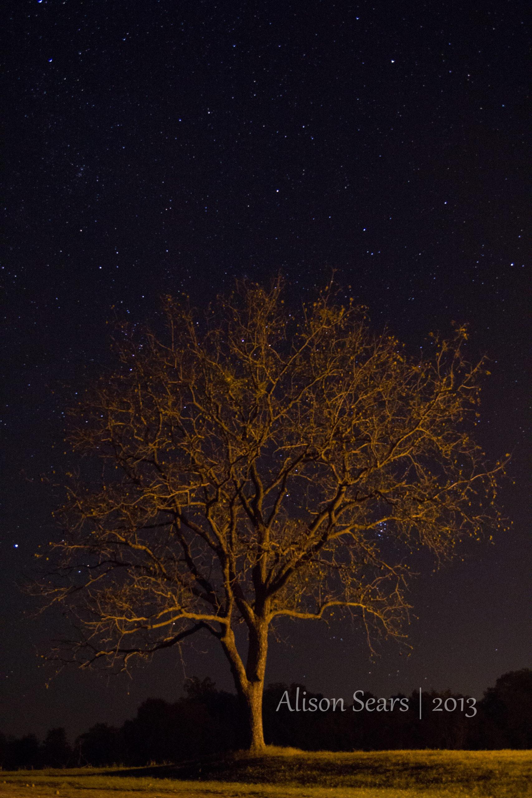 IMG_7200-18-scaled Enlightened Tree
