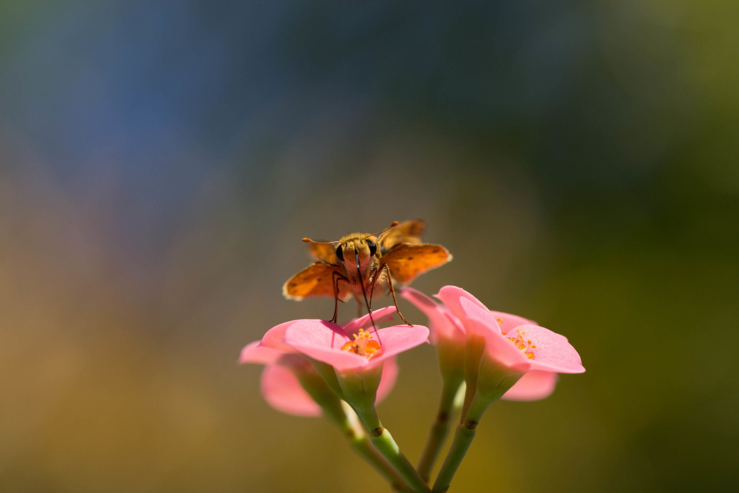 SOOCmoth-scaled Nectar Macro Edit