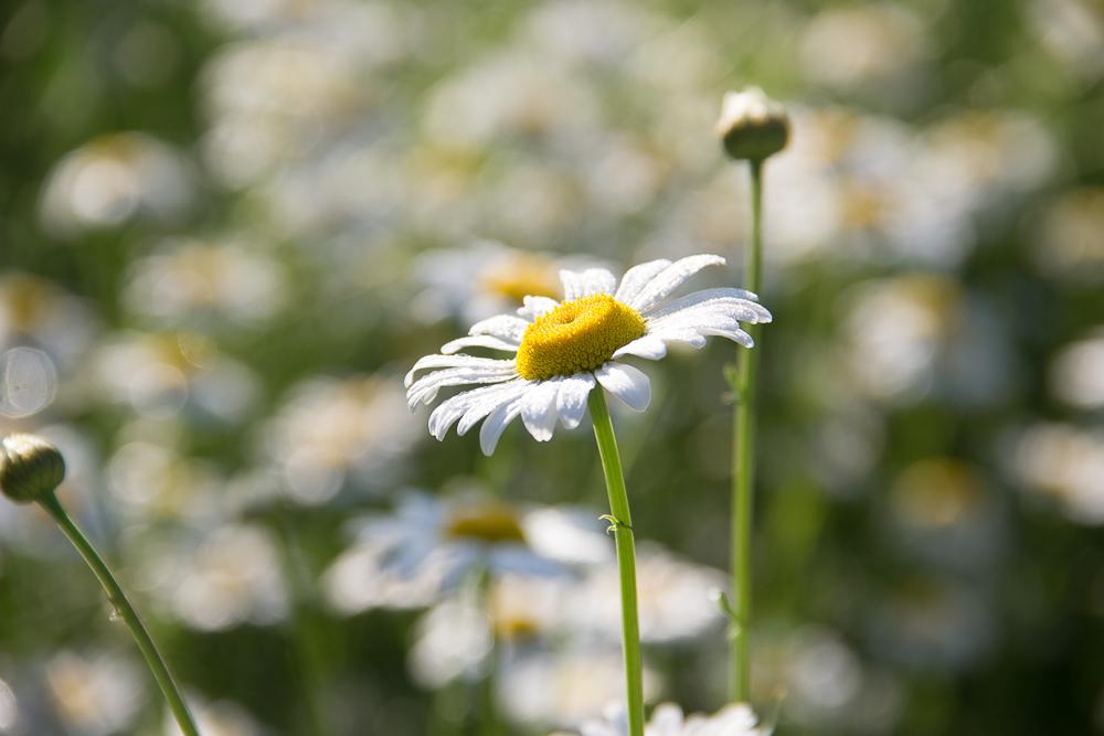 daisy-b-1 Enlighten LR Presets and Four Seasons Actions