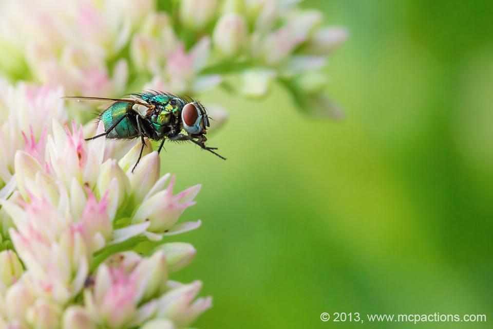 macro-bees-and-flies-17