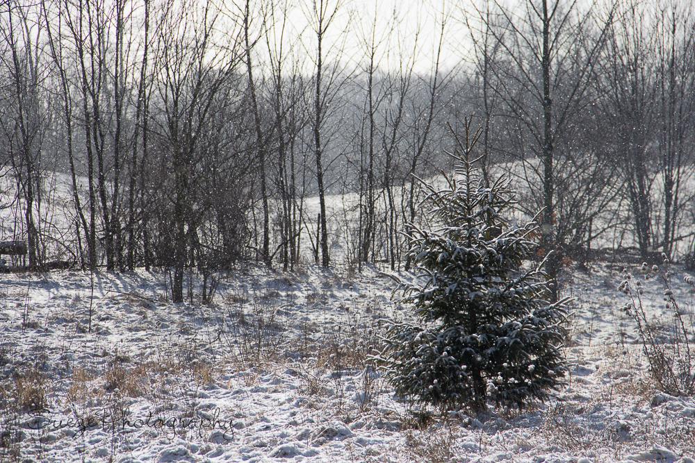 magical-winter-tree-b-1 Magical Winter Edit Using Seasons, Textures, and Enlighten