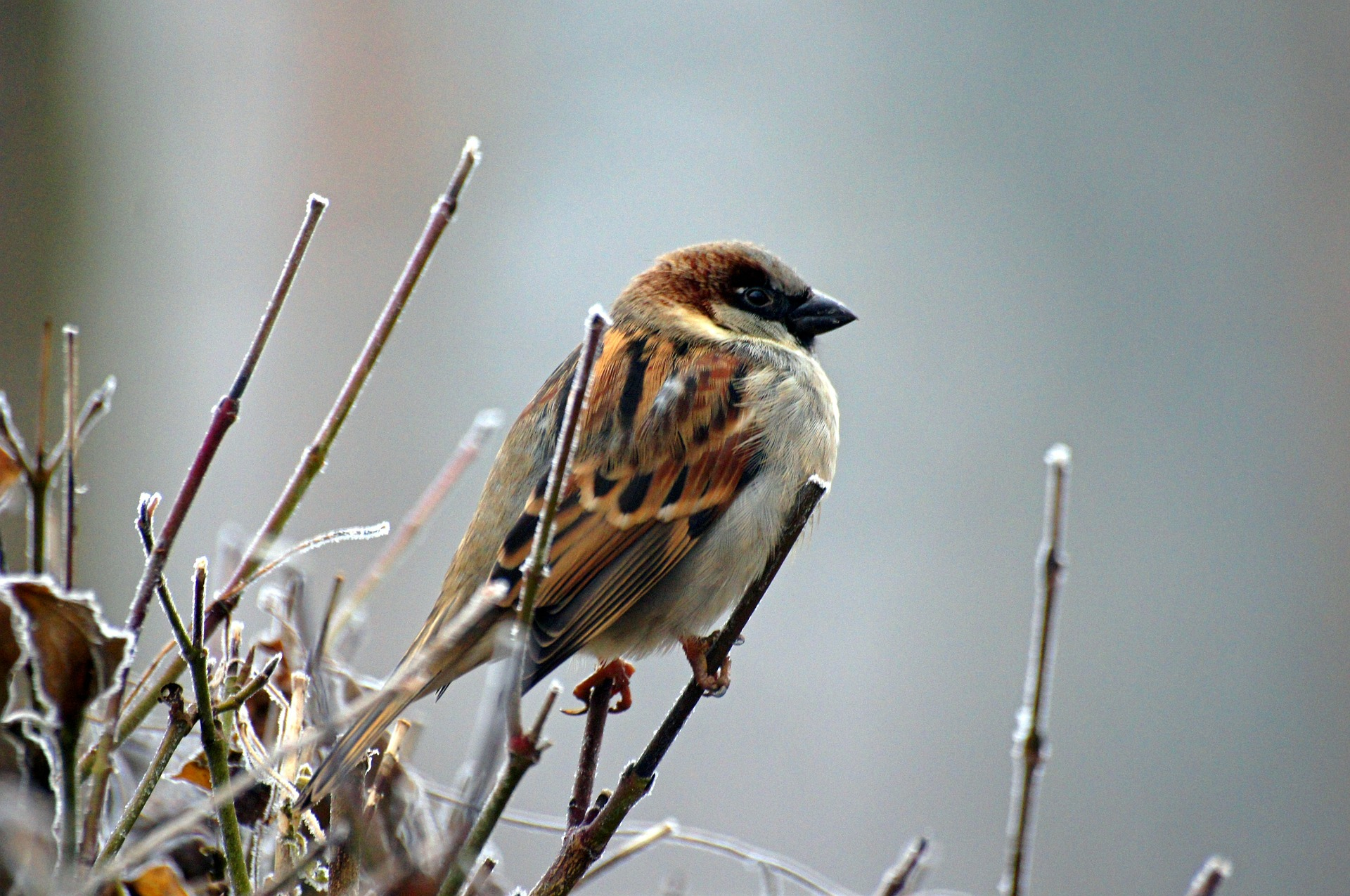 sparrow-50346_1920 Beauty of Nature Enhanced with Inspire