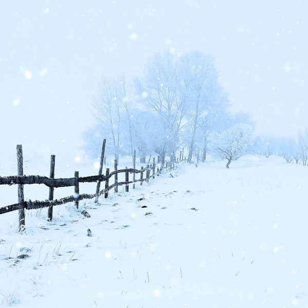 winter-snow-action-image